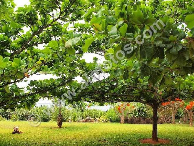 Foto de for Jardin tropical plantas