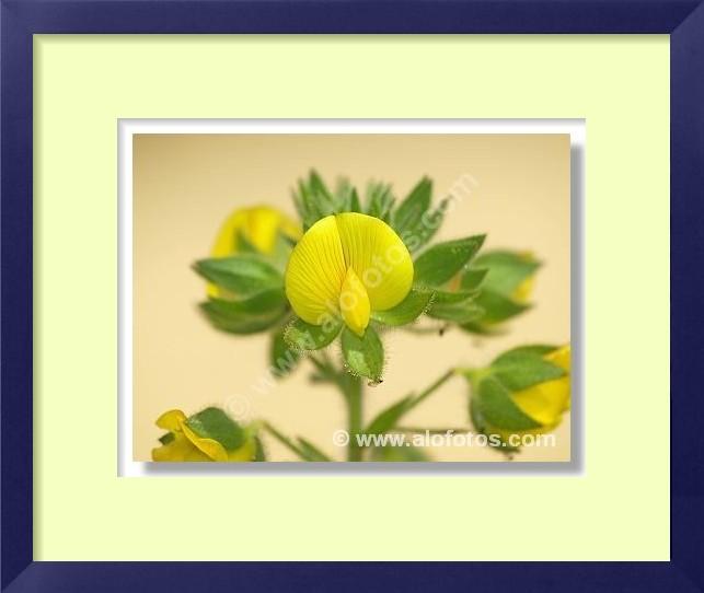 Descripción de la foto flores amarillas