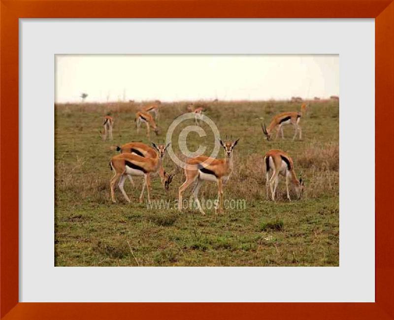 fotos de Paisajes de Africa con animales