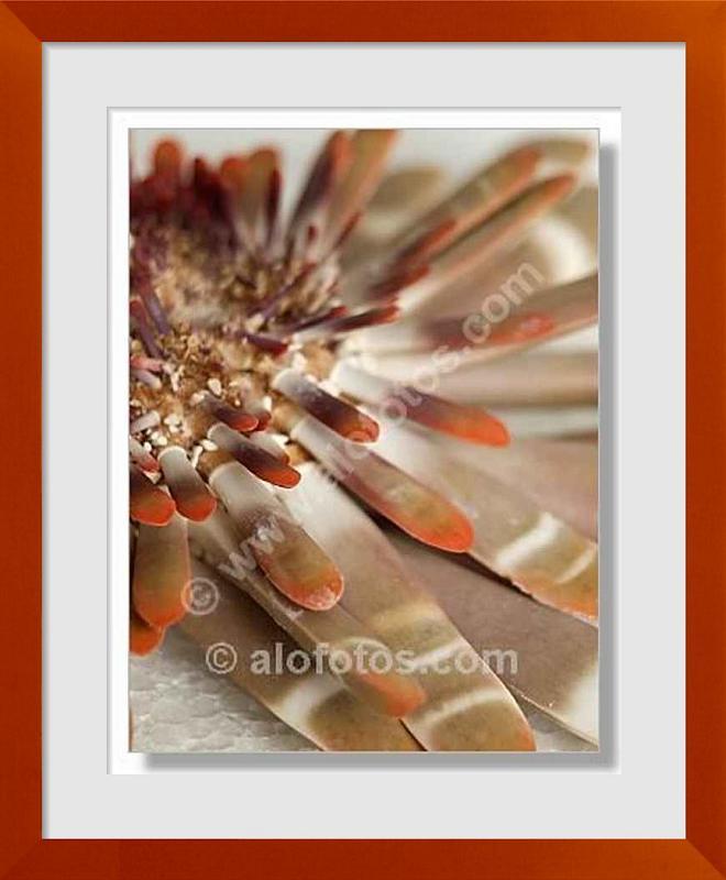 fotos de animales acuaticos