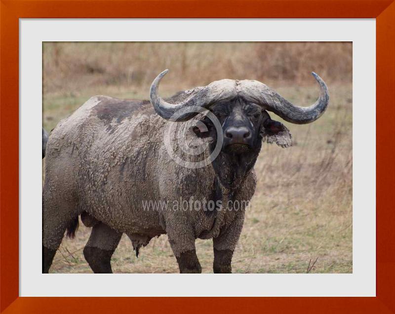 fotos de animales con cuernos