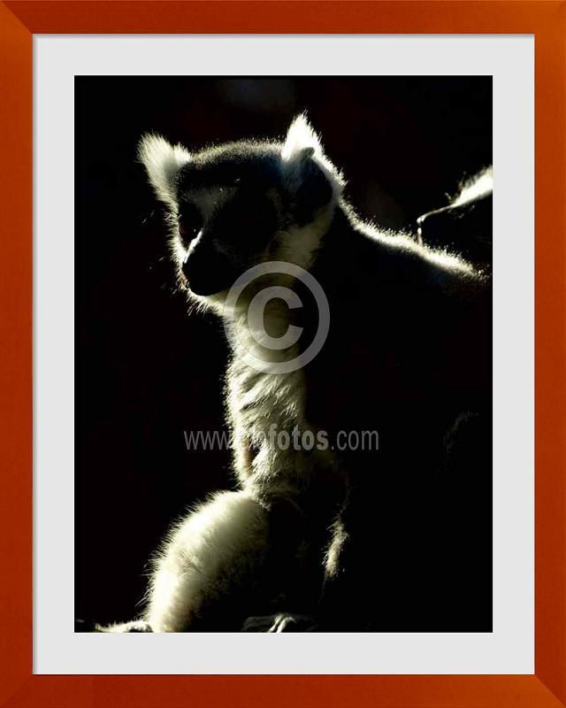 fotos de animales de Madagascar