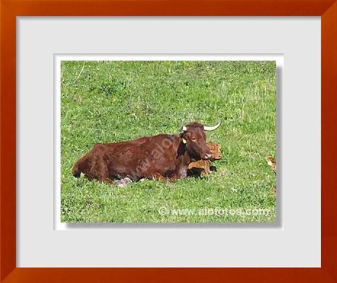 fotos de animales de la granja