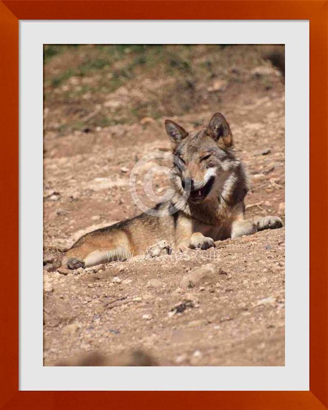 fotos de animales depredadores