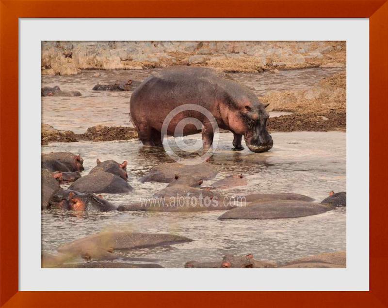 fotos de animales salvajes de Africa