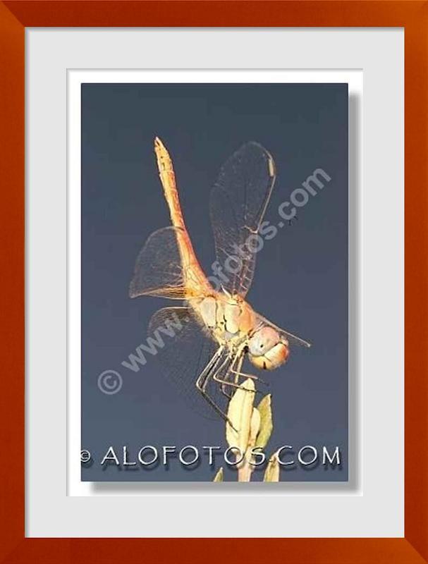 fotos de animales voladores