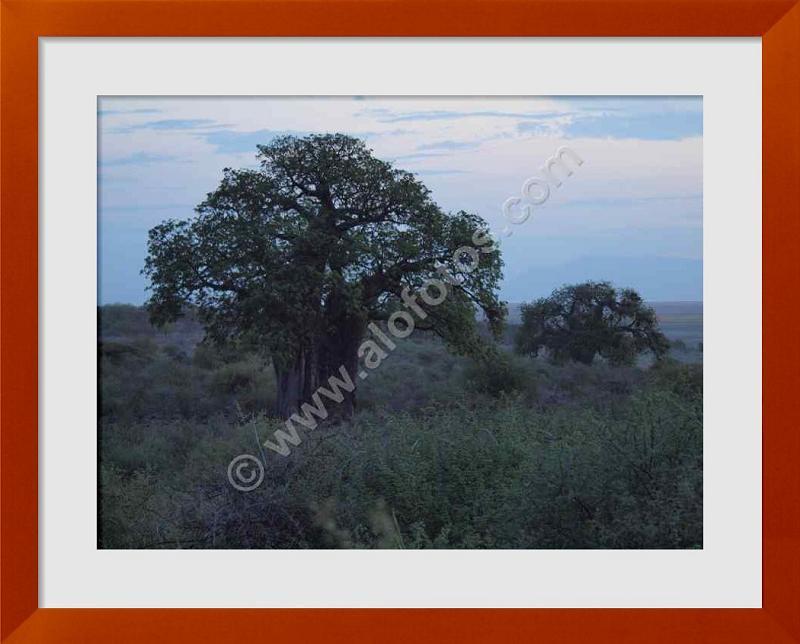 fotos de arboles sagrados