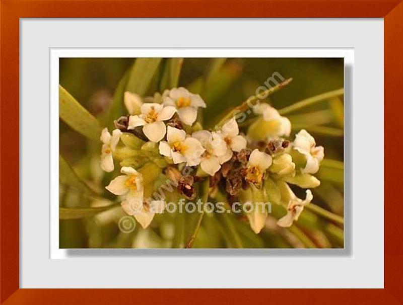 fotos de arbusto