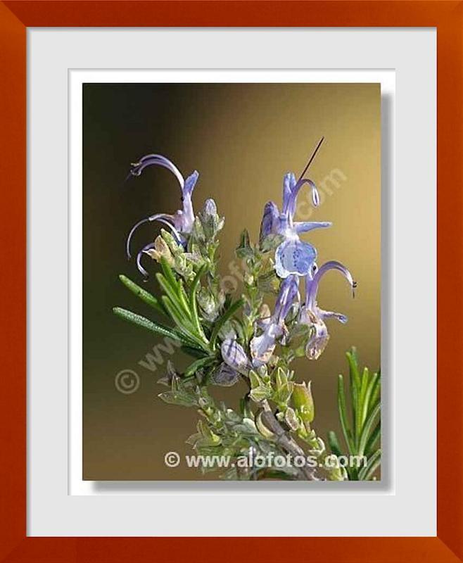 fotos de arbustos