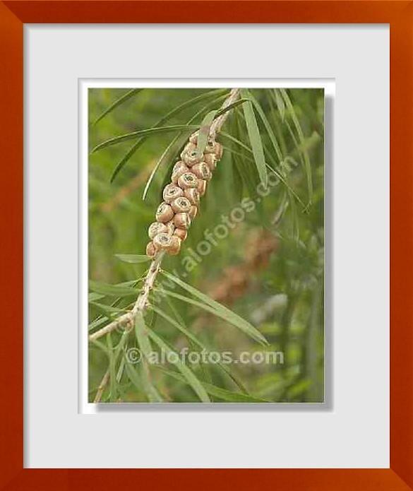 Fotos de arbustos ornamentales ejemplos tipos y nombres for Arbustos ornamentales de exterior