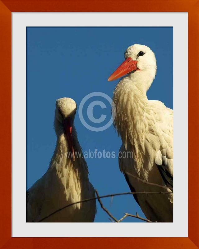 fotos de aves migratorias
