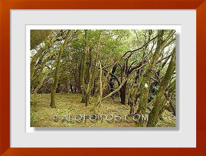 fotos de ecosistemas