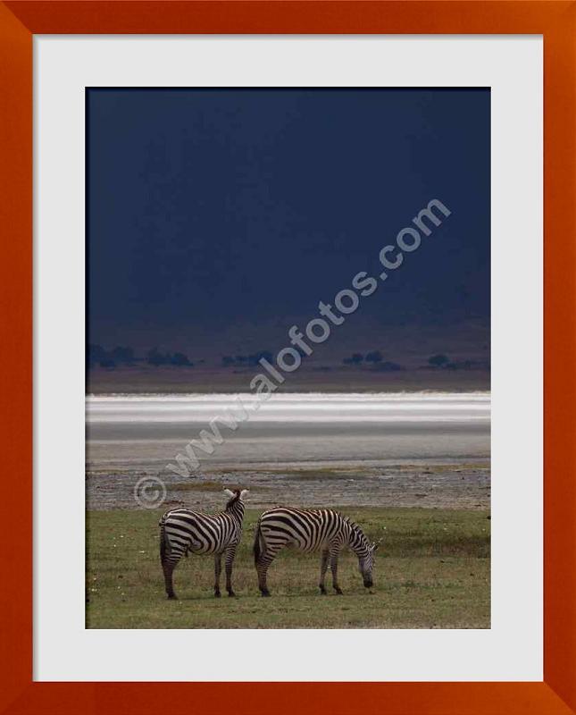 fotos de fauna de Africa