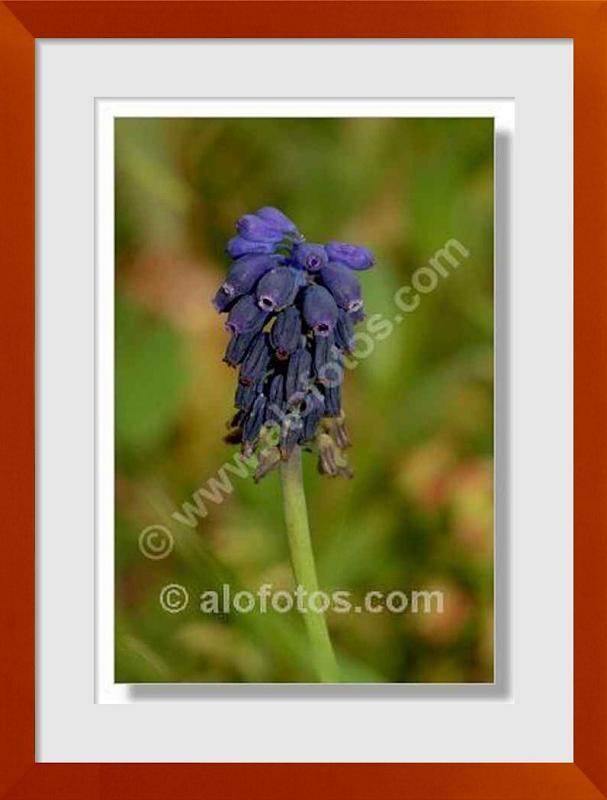 fotos de flora mediterranea