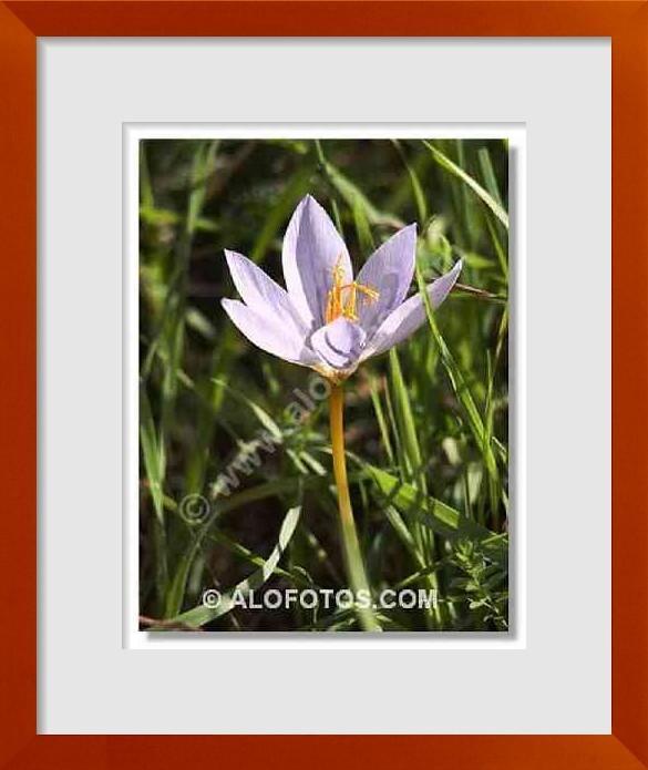 Fotos de flores silvestres ejemplos tipos y nombres - Tipos de flores silvestres ...