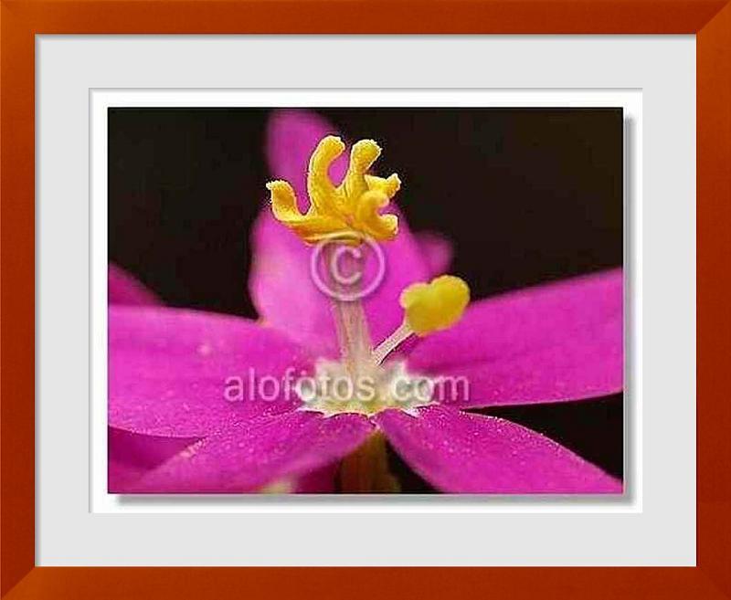 fotos de flores de Espa�a
