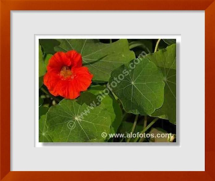 fotos de flores naranjas