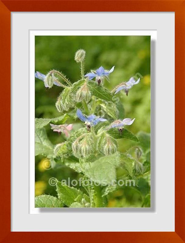 fotos de flores silvestres