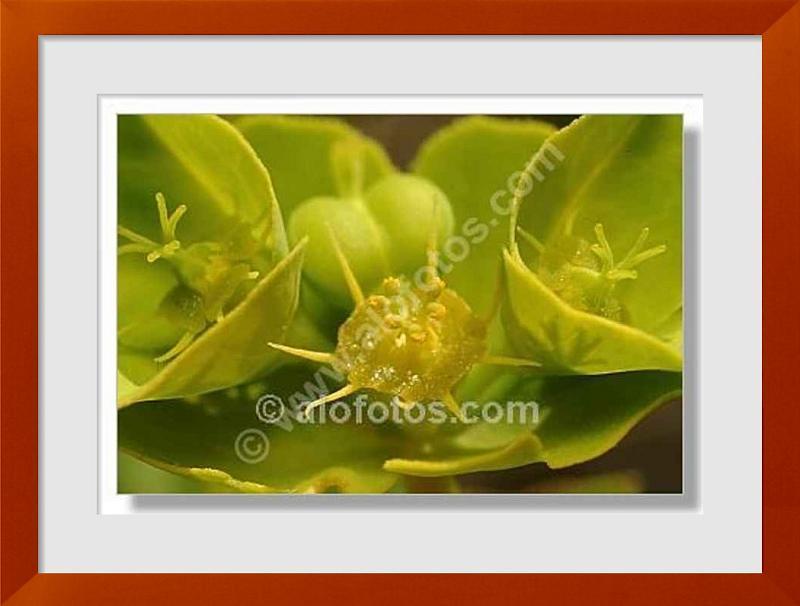 fotos de flores verdes