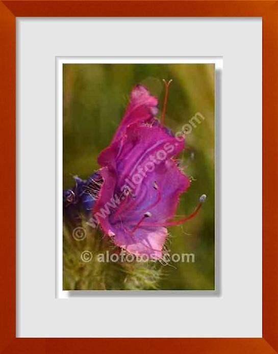 fotos de flores violetas