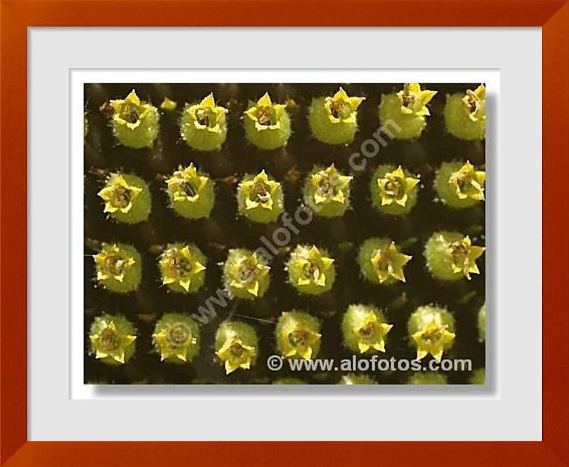fotos de girasoles