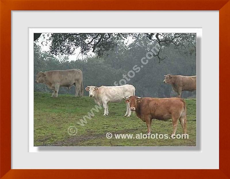 fotos de herbivoros