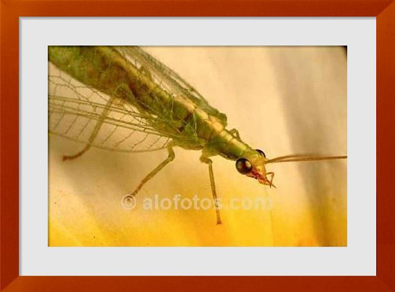 fotos de insectos