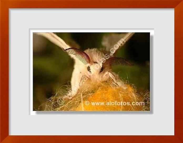 fotos de insectos beneficiosos