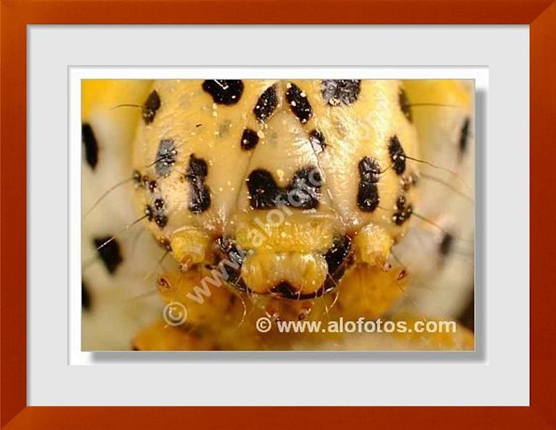 fotos de larva
