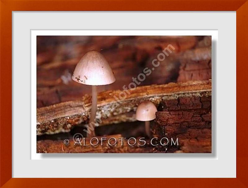 fotos de madera muerta