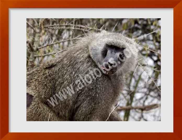 fotos de mamiferos