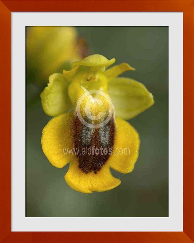 fotos de orquideas silvestres
