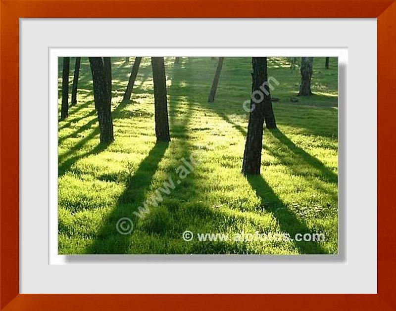 fotos de paisaje natural