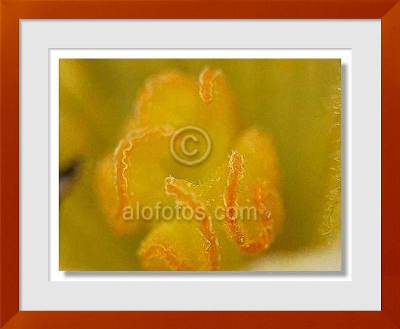 fotos de pepino