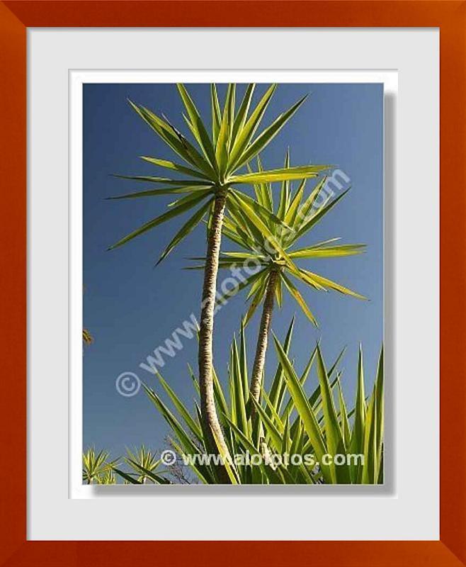 fotos de plantas de jardin