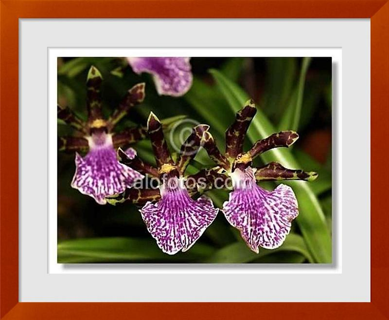 Fotos de plantas decorativas ejemplos tipos y nombres for Plantas decorativas tipos