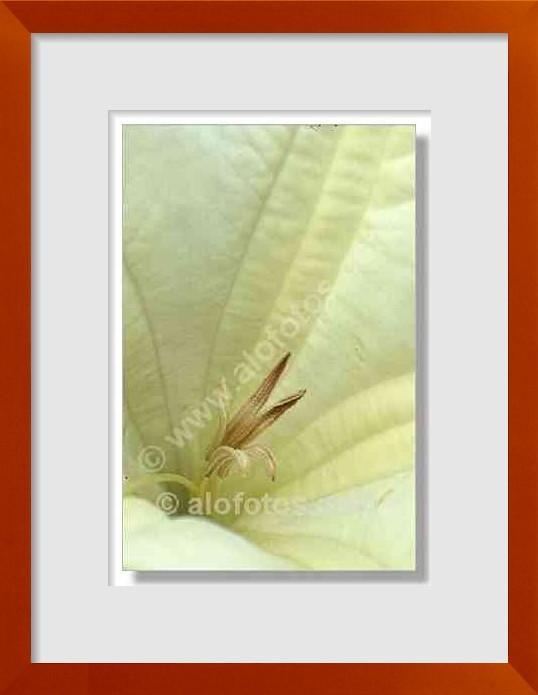 fotos de plantas venenosas