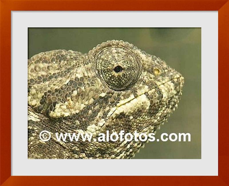 fotos de reptiles