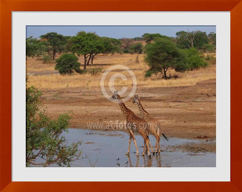 fotos de tanzania africa