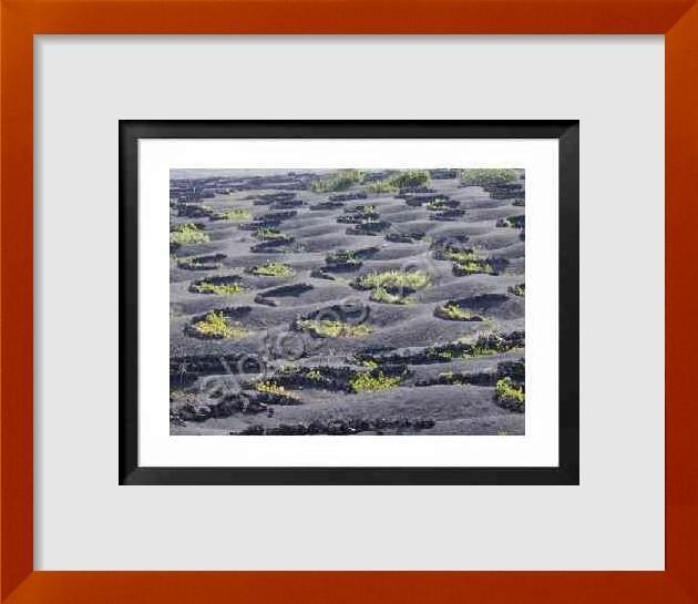 fotos de textras naturales