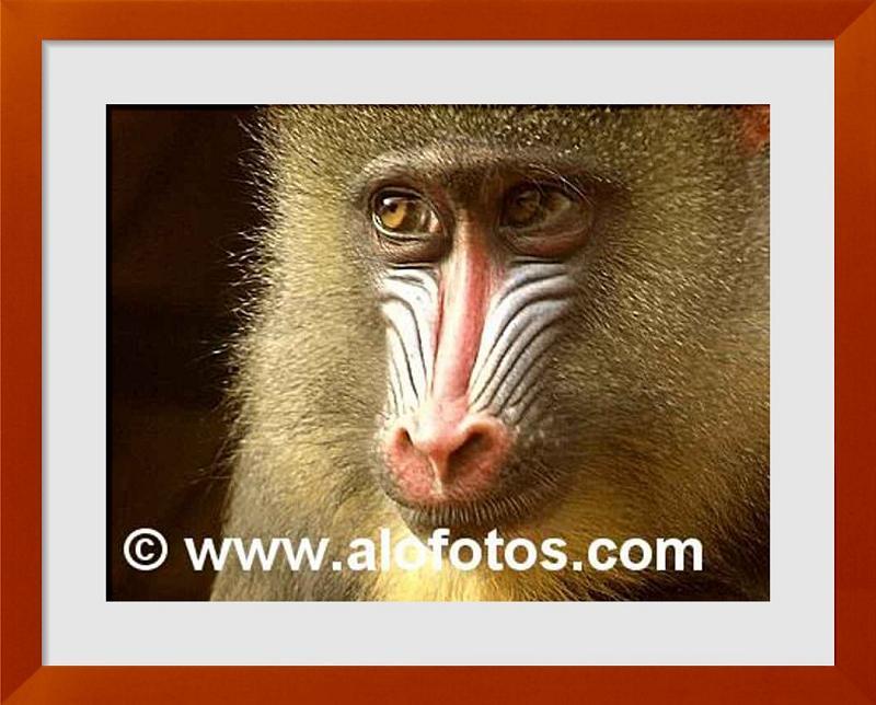 fotos de vertebrados