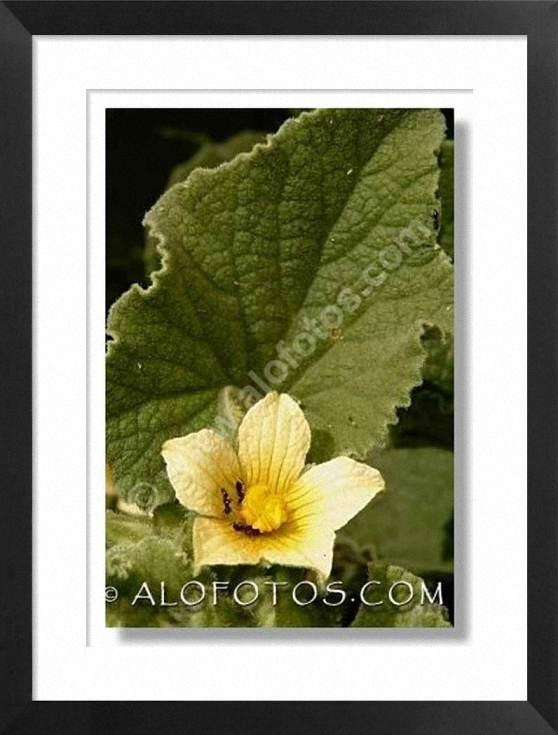 plantas t�xicas