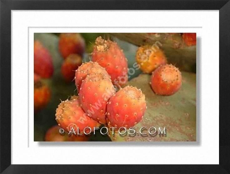 fruta, higos chumbos