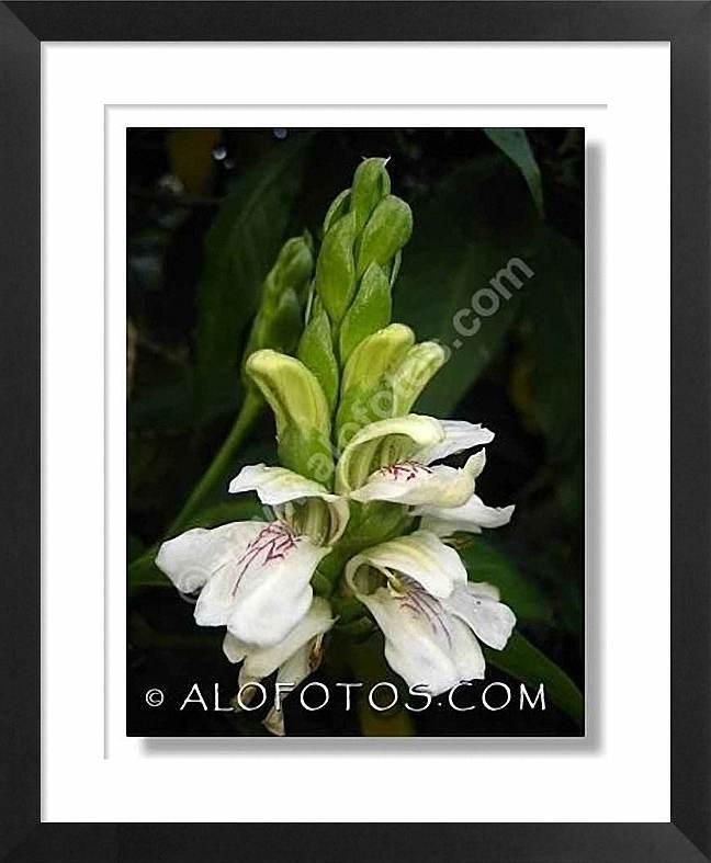 planta propiedades medicinales