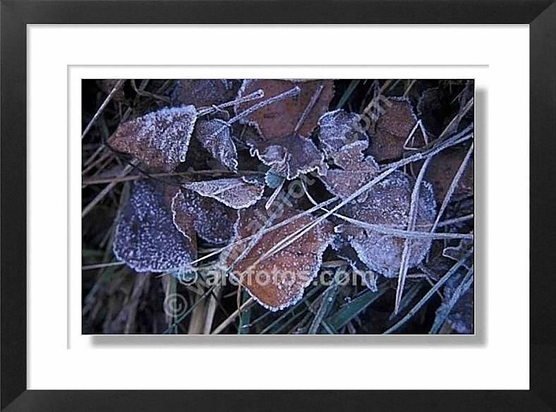 Escarcha, hojas