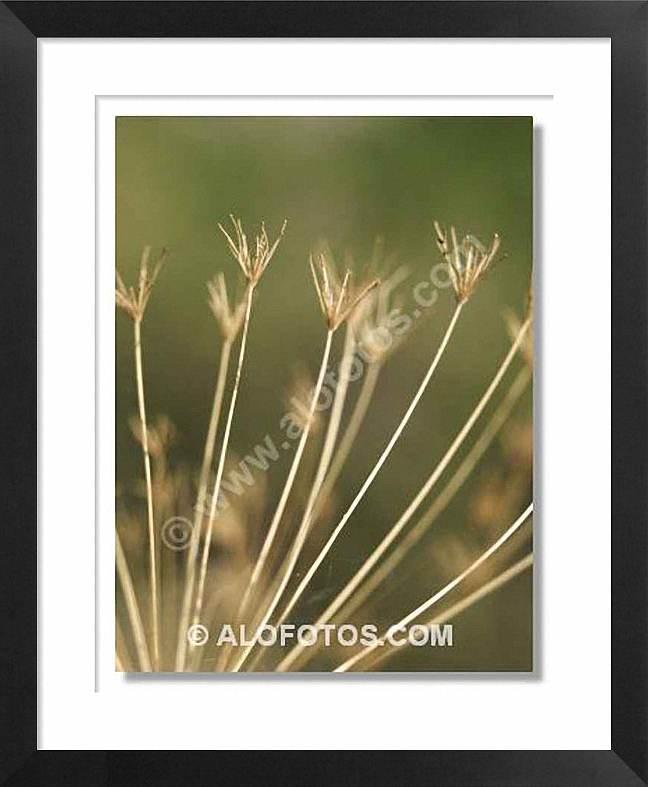 formas, hierbas secas