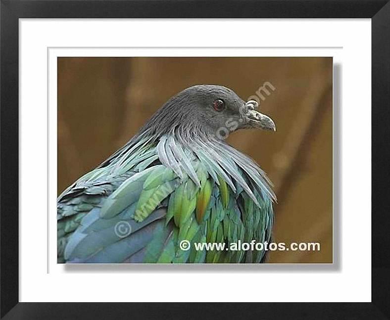aves, palomas