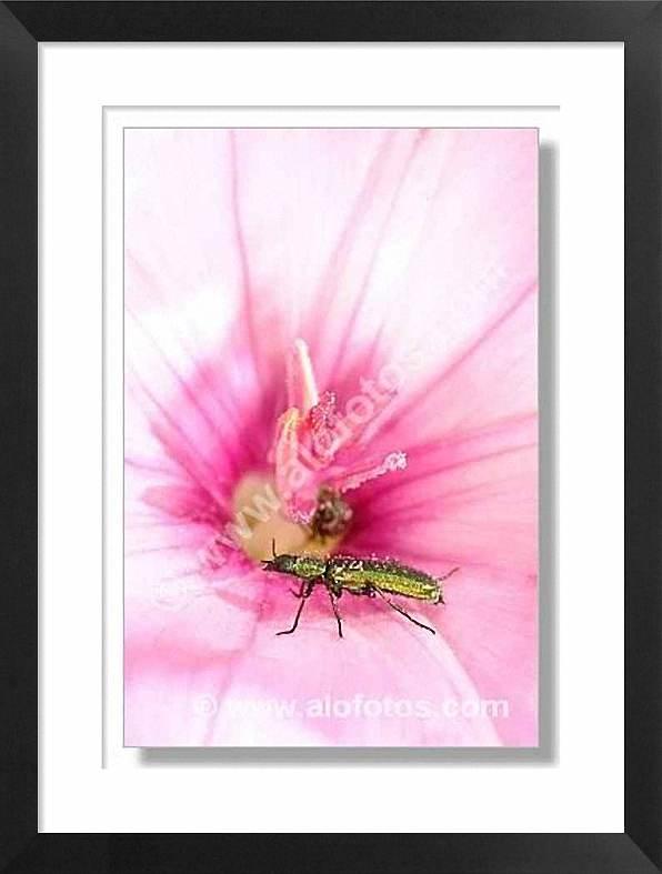 escarabajo sobre una flor