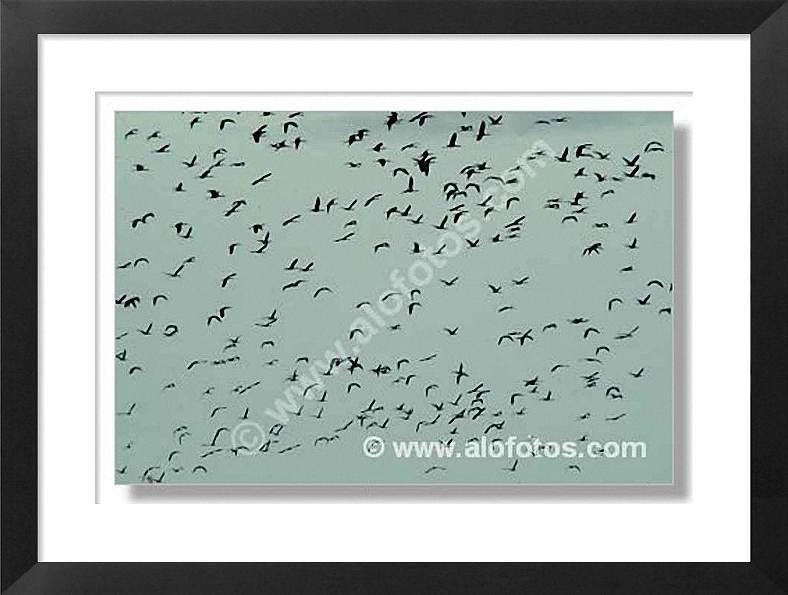 aves volando, moritos