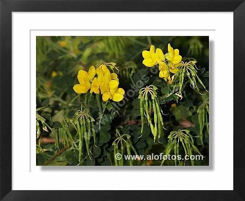 flores amarillas en alofotos